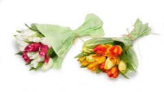 Tulpen Stoff