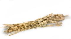 Weizen getrocknet
