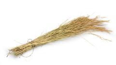 Reis getrocknet